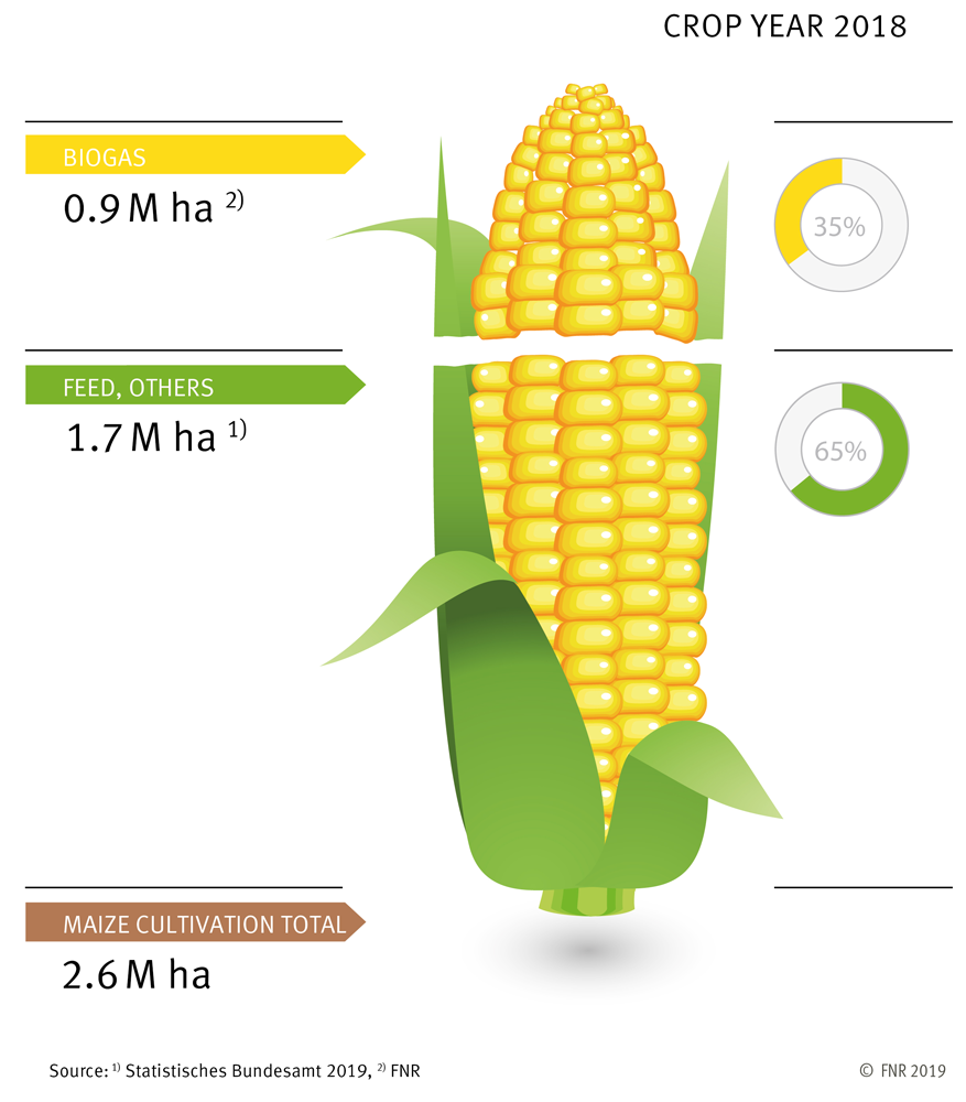 Cultivation of maize in Germany (crop year 2018)